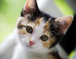 Cat5_medium