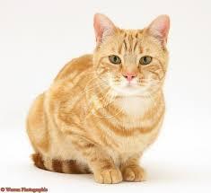 Cat6_medium