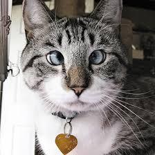 Cat7_medium