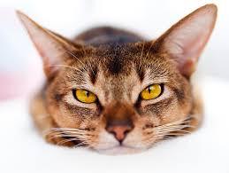 Cat9_medium