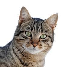 Cat11_medium