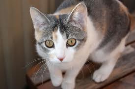 Cat12_medium