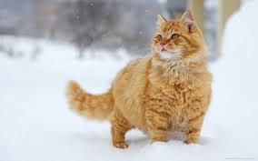 Cat14_medium