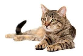 Cat15_medium