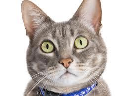 Cat16_medium