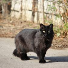 Cat17_medium