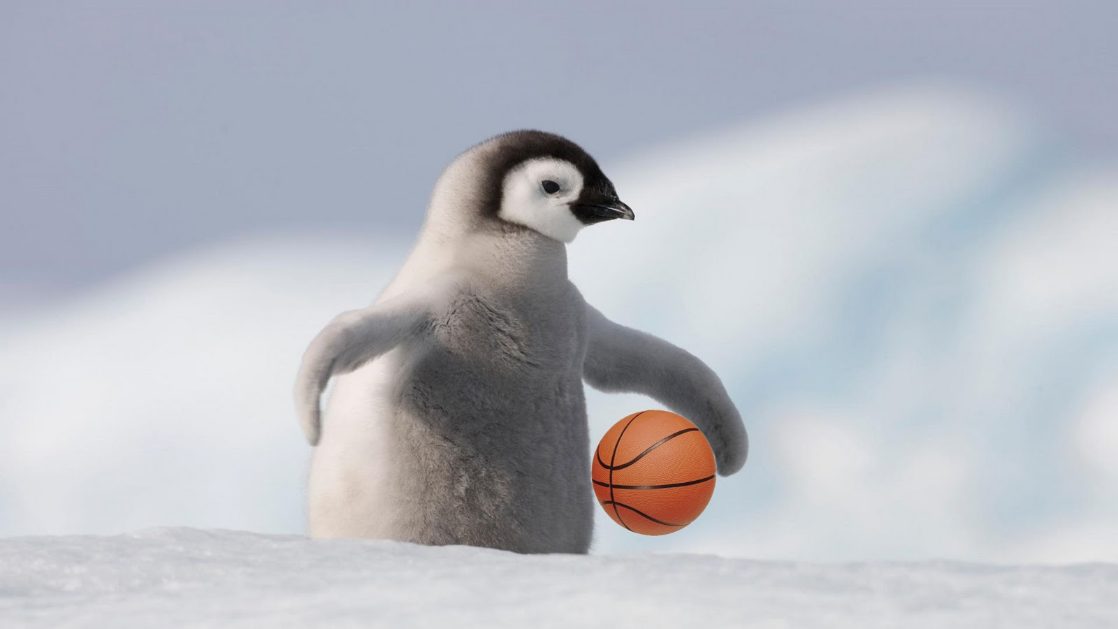 Cute penguin - photo#23