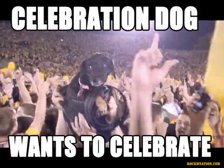 Celebration_dog_medium