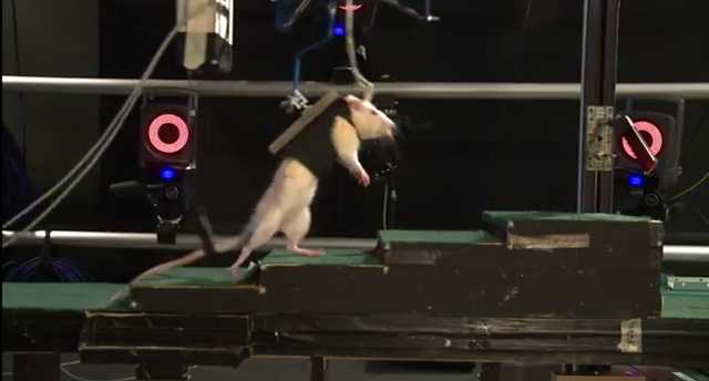 Robot rat harness