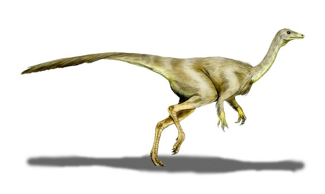 Ornithomimid (wikimedia commons)