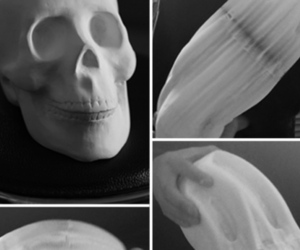 flexible paper skull