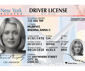 new new york state drivers' license FROM NYT