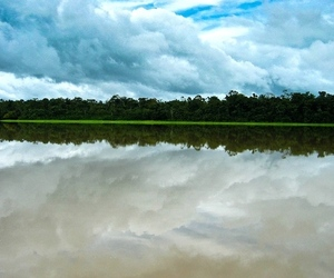 amazon river (flickr shaun hurley)
