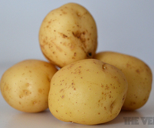 Potatoes stock
