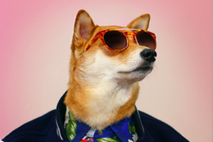 menswear dog 2