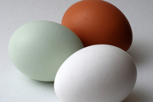 eggs (Wikimedia Commons)