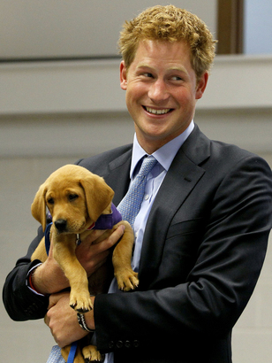 Prince-harry-and-a-puppy
