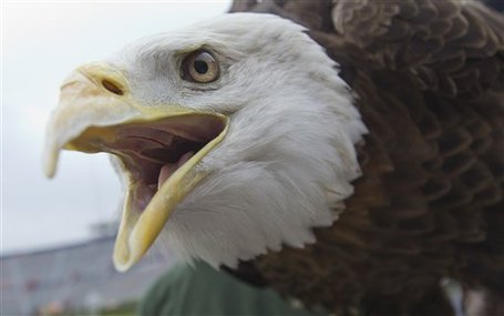 61708_auburn_eagle_crash_medium