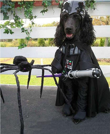 Dog-darth-vader-costume_medium