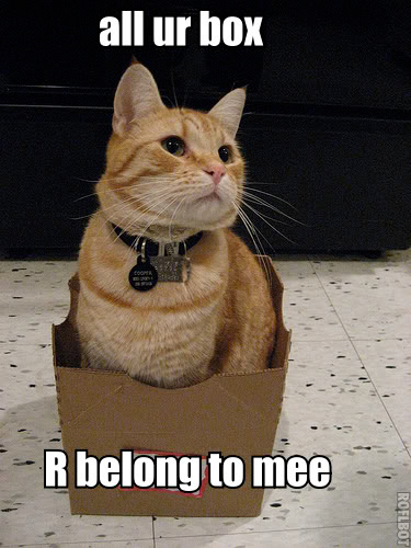 Box_cat_medium