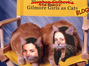 gilmourecats