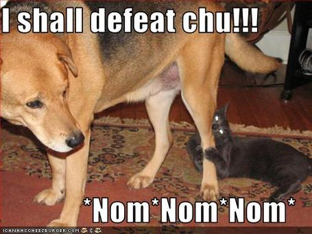Funny-pictures-cat-plans-to-defeat-dog_medium