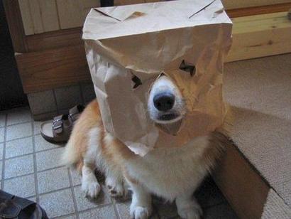 Random_dog_medium