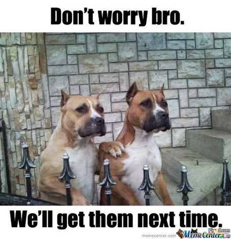 Dont-worry-bro-well-get-them-next-time_o_101159_medium