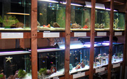 Aquariumshop4_medium