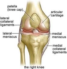 Knee-joint-anatomy1_medium