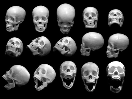 Free-skull-photos-preview_medium
