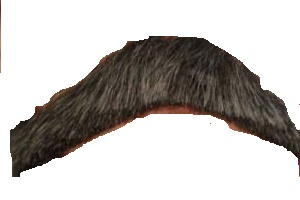 Fisherstache_medium