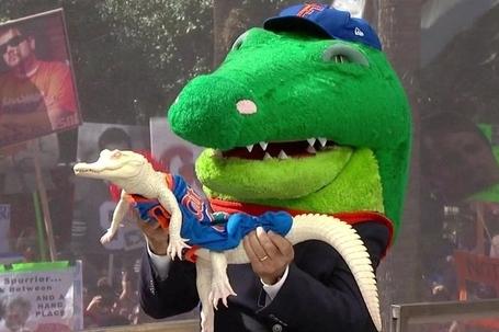 Gators_1
