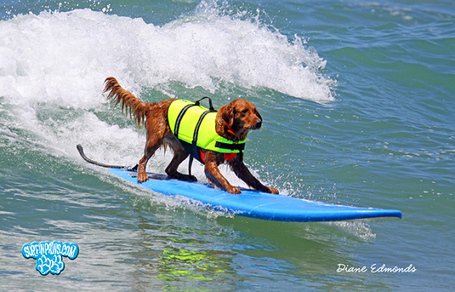 Surfdog_medium