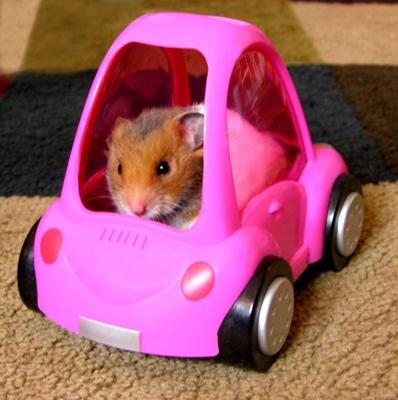 Richard-hammond-car-crash-photos_medium