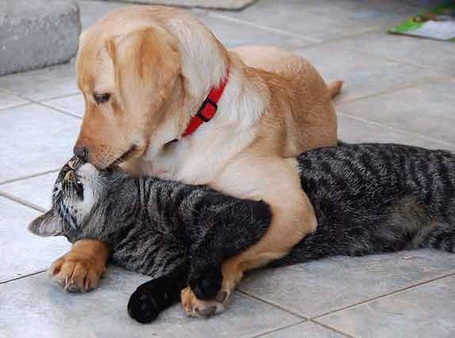 Cats-and-dogs-hugging-it-out-20_medium