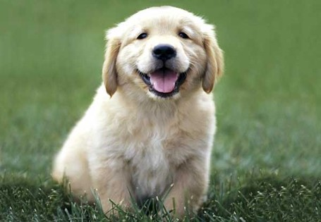Puppy_medium