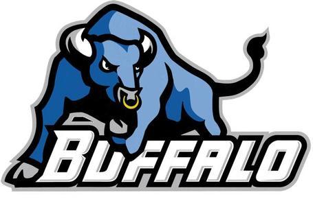Buffalo_bulls_medium