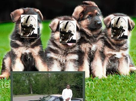 Puppy1e_medium