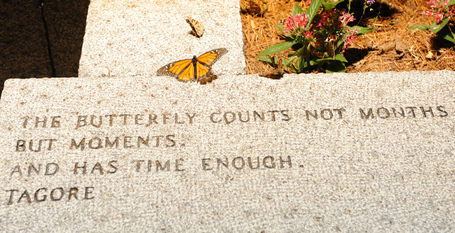 Monarch_butterfly_quote_medium