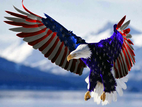 American-flag-eagle_medium