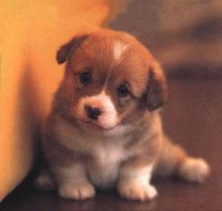 Cute-puppy-pictures2_medium