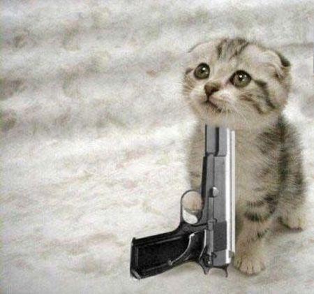 Kitten_die_medium