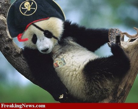 Pirate-panda--47328_medium