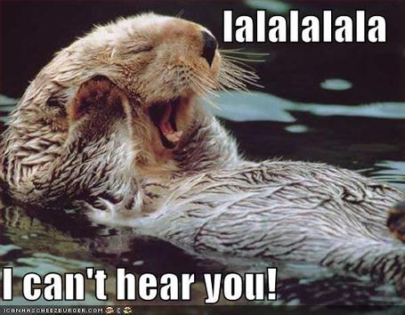 Funny-pictures-beaver-cant-hear-you_medium