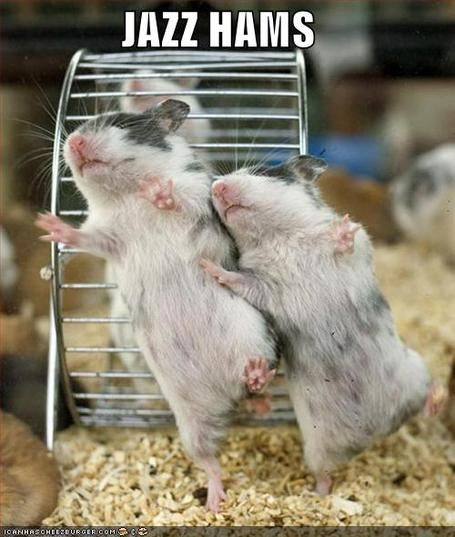 Funny-pictures-jazz-hamsters_medium