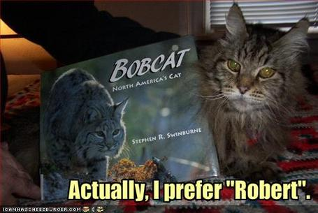 Funny-pictures-bobcat-prefers-to-be-called-robert_medium