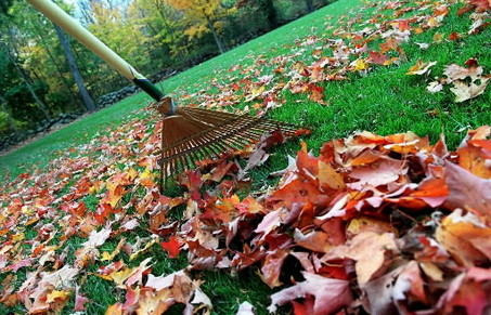 Raking_leaves3_medium