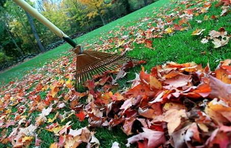 Raking_leaves3_medium