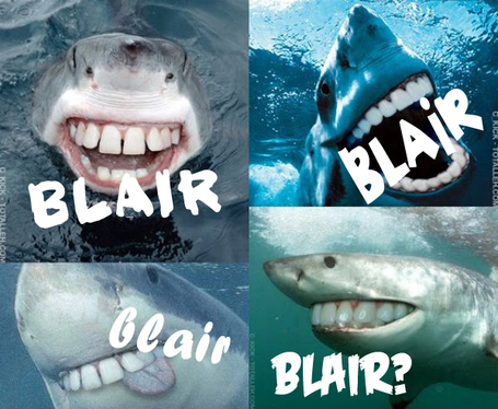 Blairsharks_medium